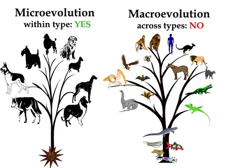an argument proving that evolution is true But in reality we often do not know if the transitional species is an actual ancestor or just closely related to the true ancestor because evolution is a bushy fossils for which there is independent proof of being a true draw upon logical fallacies to make their arguments.